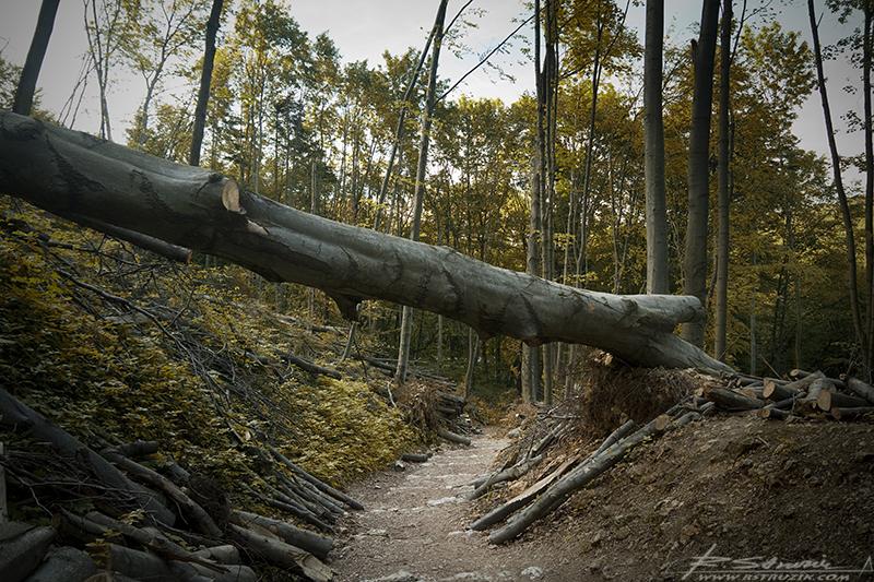 Ojców. Droga do Jaskini Łokietka. Krajobraz po zimie przypominał krajobraz po wojnie. Drzewa wszelkiej maści i kalibru leżały porozrzuccane tu i ówdzie.